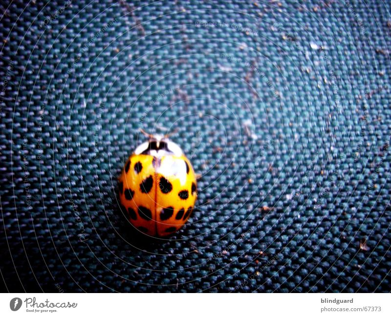 It's a bugs life Makroaufnahme Stoff Insekt Schiffsbug Käfer der kleine kerl hat einfach nicht stillgehalten der stoff aus dem die zelte sind orange blau
