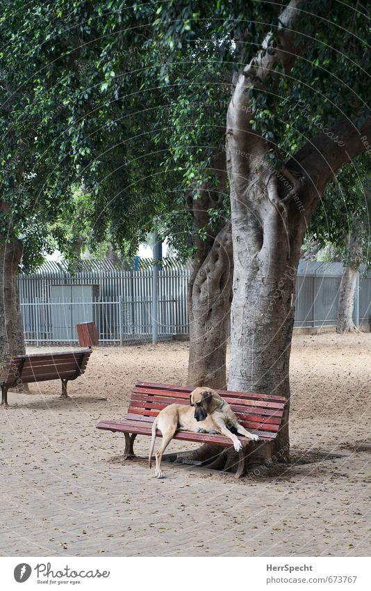 Keiner spielt mit mir Baum Park Tier Haustier Hund Deutsche Dogge 1 sitzen träumen Traurigkeit warten bedrohlich groß Stadt Einsamkeit Parkbank Hundezone