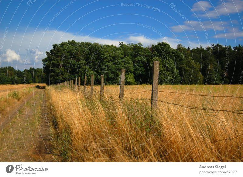 Ein Weg am Kornfeld Fußweg Waldrand Sandweg Feldrand Zaun Gerste Gras grün Wolken Landwirtschaft Wiese Himmel Getreide gold blau Natur Freiheit Ferne