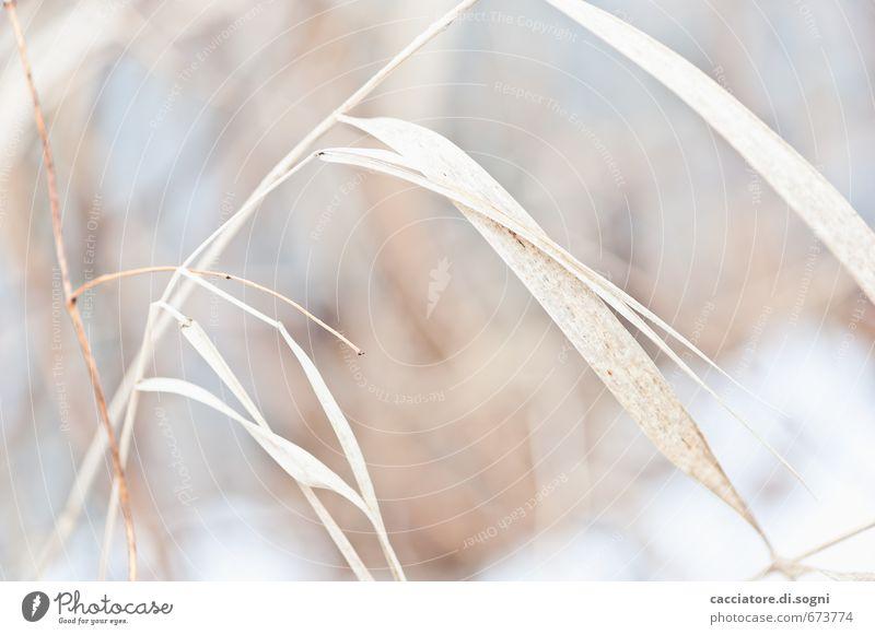 wenig Natur schön Pflanze Einsamkeit ruhig Senior Gras Freiheit natürlich hell braun orange ästhetisch Schönes Wetter einfach Vergänglichkeit