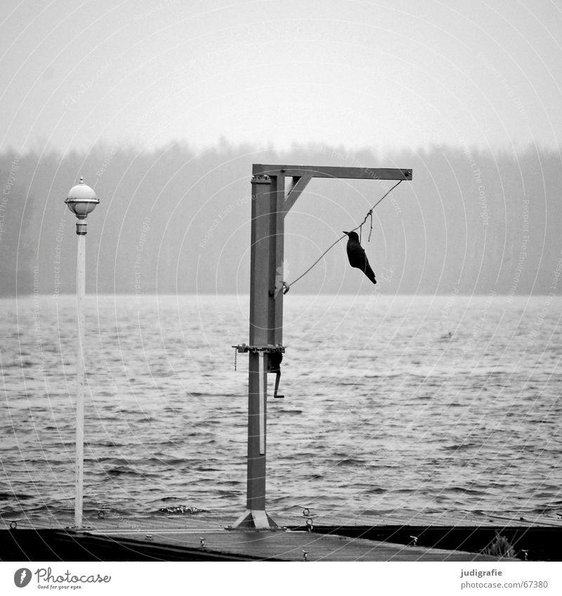 Am Ende See Teich Steg Lampe Galgen Kurbel Vogel Krähe vergangen Wald Nebel grau trist gruselig hängen ruhig Hannover falsch Federvieh Vogeldreck Wasser