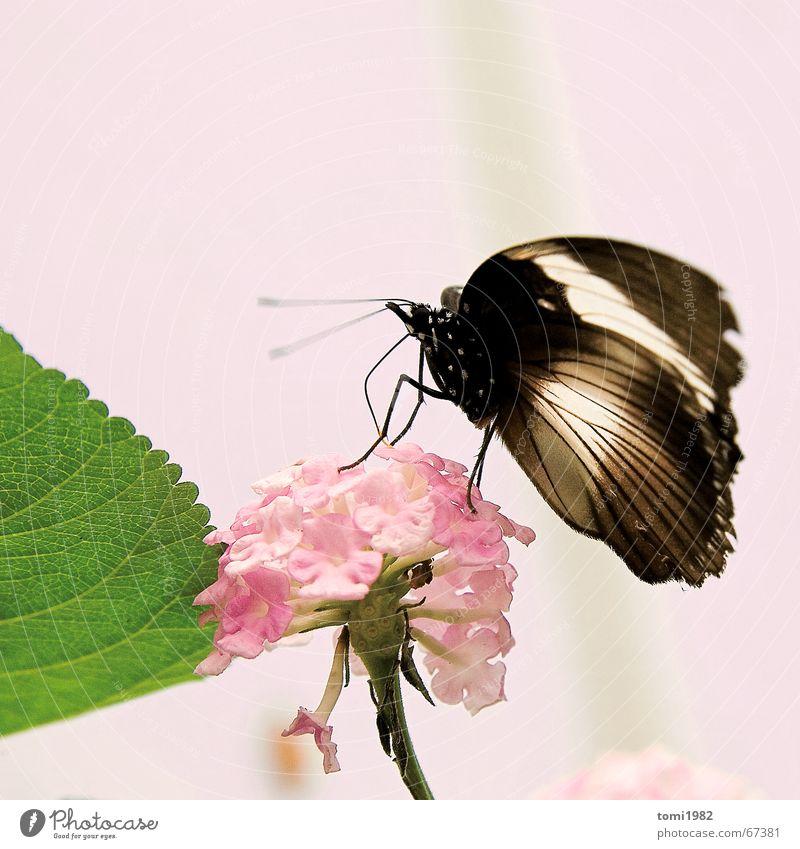 Sommertag schön Blume Sommer Frühling Glück rosa Insekt Schmetterling