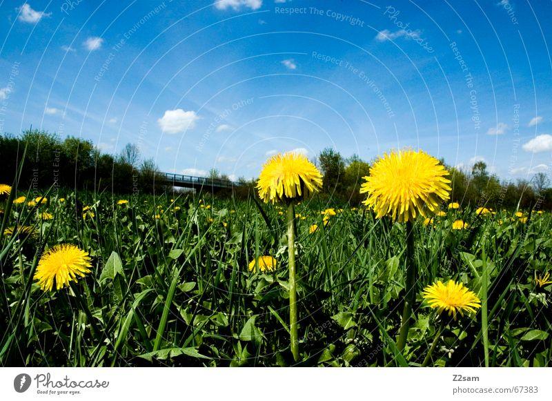 Flower meadow Himmel Blume grün blau Wolken gelb Ferne Wiese Idylle Blumenwiese himmelblau Flowerpower