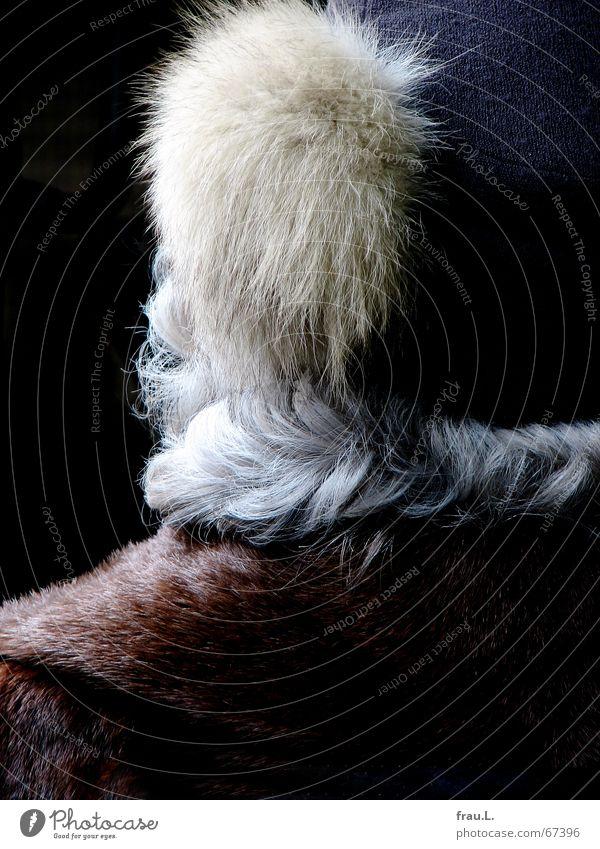 haarig Winter kalt grau Haare & Frisuren Mode Wellen Bekleidung Fell Schutz 50 plus Hut Locken Weiblicher Senior Pinsel Ekel