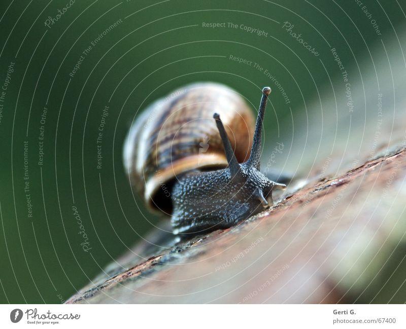 ___o\/ Tier Bewegung Wege & Pfade glänzend Geschwindigkeit Verfall Rost Geländer Rausch Schnecke Glätte Fühler Absturz Lack