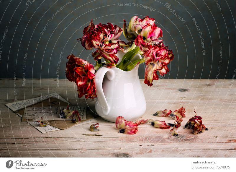 Stillleben mit Tulpen Blume Blumenstrauß Vase Brief Postkarte Holz Glas Duft verblüht dehydrieren natürlich retro schön grau rot Stimmung Frieden Idylle