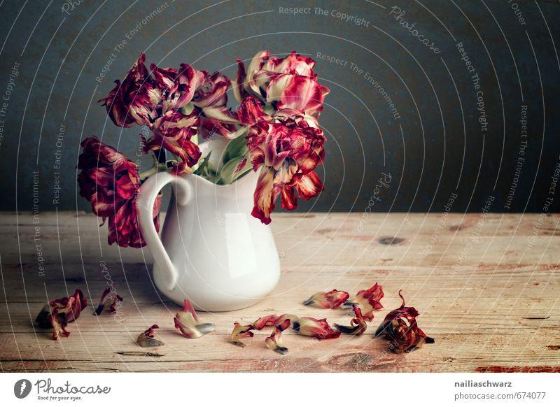 Stillleben mit Tulpen Pflanze Blumenstrauß Holz Blühend verblüht dehydrieren Duft elegant schön natürlich retro trocken rot Romantik Trauer ästhetisch Farbe