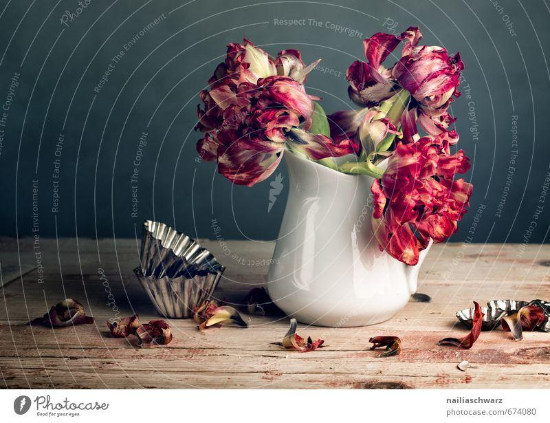 Stillleben mit Tulpen Vase Backform Blume Blumenstrauß Tisch Holz Glas Metall verblüht dehydrieren retro schön trocken mehrfarbig grau rot Romantik ästhetisch