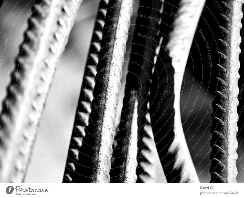 lines Stab Muster rau krumm gekrümmt Ordnung griffig Schatten gartenegerät verrückt Linie black&white Schwarzweißfoto schärfeverlauf Riffel bohnenstangen