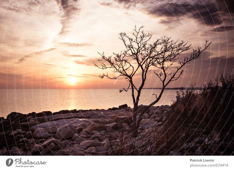 Freiheit Umwelt Natur Landschaft Pflanze Urelemente Erde Himmel Wolken Sonne Sonnenfinsternis Sonnenaufgang Sonnenuntergang Sonnenlicht Wetter Schönes Wetter