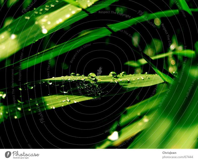 Broadway Wasserstraße Wassertropfen grün träumen nass Natur Erholung ruhig Urwald Zoo Straße Eisenbahn tröpfchen beads schön water drip sheet sheets dream wet