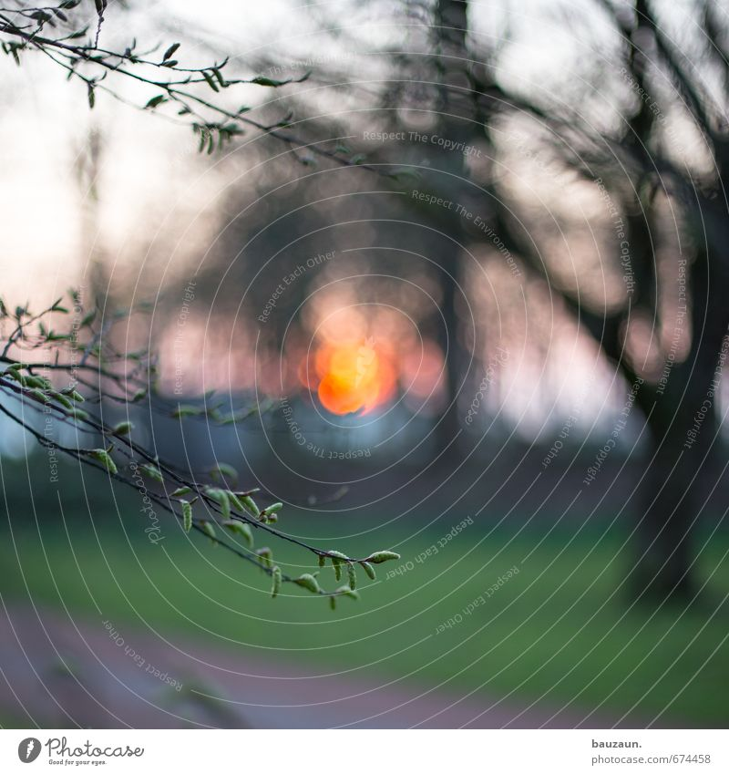sonnenuntergang unscharf. Natur schön grün Pflanze Sonne Baum Landschaft Blatt Umwelt Gefühle Wiese Frühling Garten Park orange Kraft