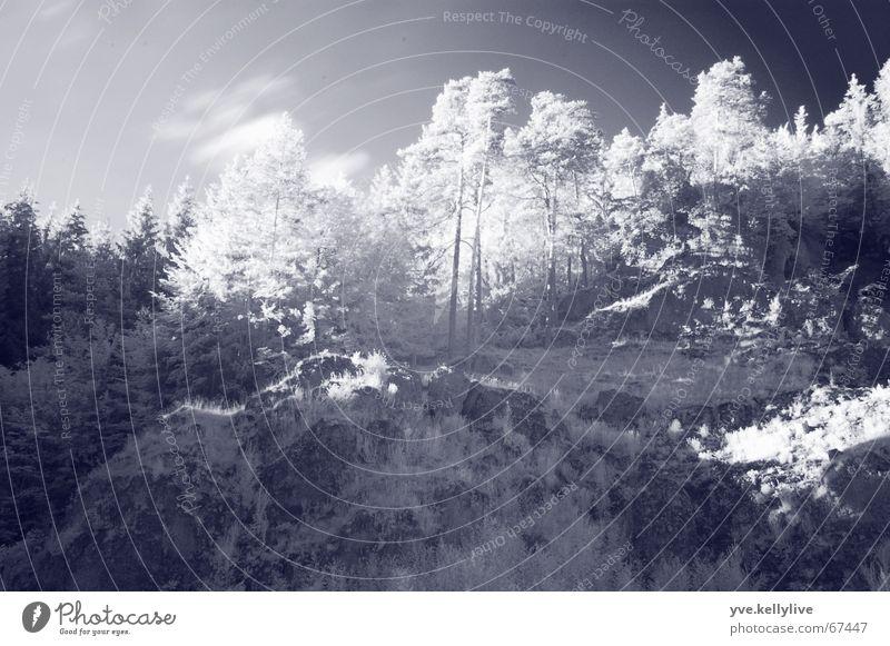 Infrarot Baum Sonne Berge u. Gebirge Fototechnik Infrarotaufnahme Wood-Effekt