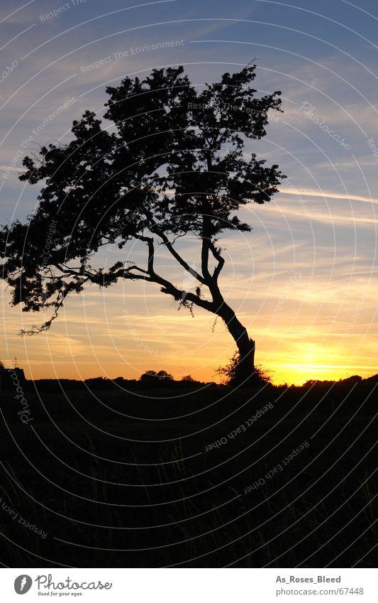 im dunkeln Sonnenuntergang Wolken Hochhaus Baum Wiese Einsamkeit ruhig Schatten orange