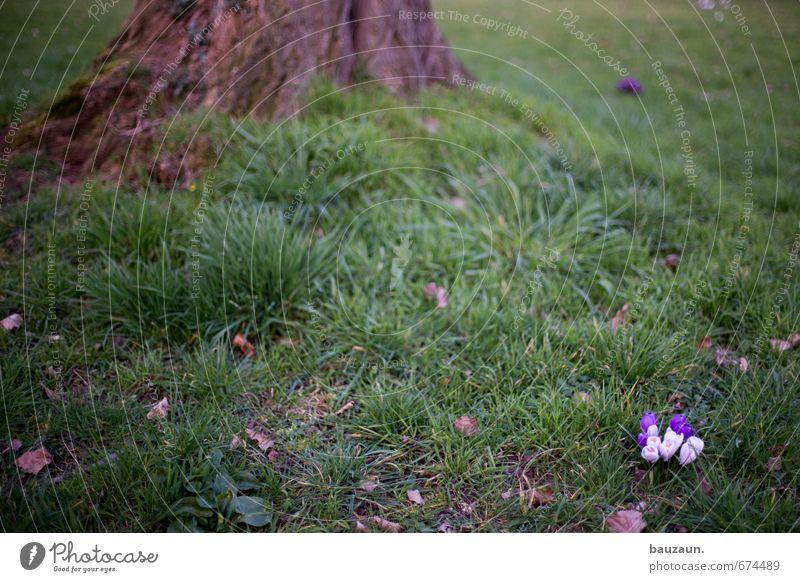 kuschelgruppe. Ausflug Häusliches Leben Garten Natur Erde Frühling Pflanze Baum Gras Krokusse Park Wiese Holz Blühend Duft Wachstum klein schön grün violett