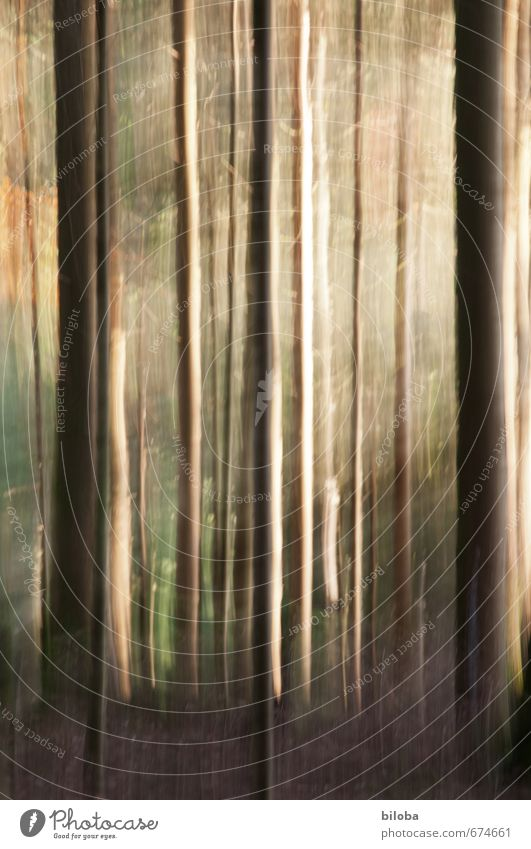 Wald Natur Tier Sonnenlicht Sommer Herbst Baum braun gelb grün Sonnenstrahlen Märchenwald Farbfoto Außenaufnahme Experiment abstrakt Muster Strukturen & Formen