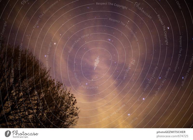 Sternenhimmel Natur Landschaft Himmel nur Himmel Wolken Nachthimmel Winter Baum Stimmung Abenteuer ästhetisch Farbe Sinnesorgane Farbfoto Außenaufnahme