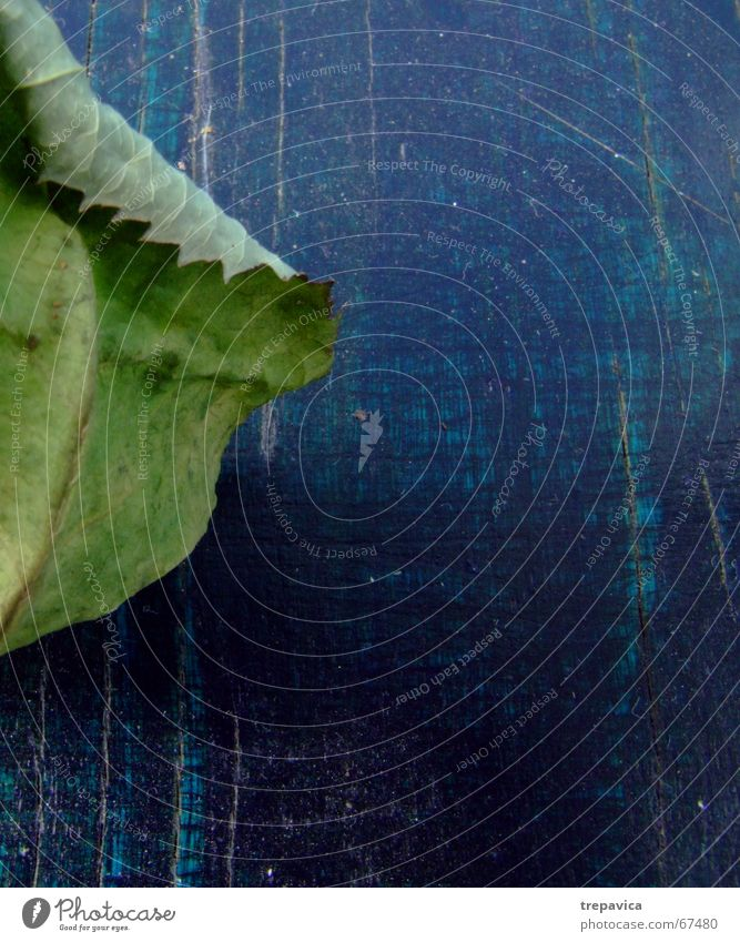 blatt grün Pflanze Blatt Holz trocken Rosenblätter grün-blau