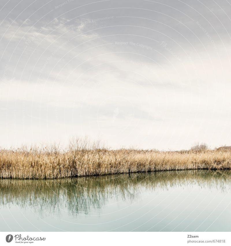 Industrieromantik END Umwelt Natur Landschaft Himmel Sonne Herbst Schönes Wetter Sträucher Seeufer Flussufer ästhetisch nachhaltig natürlich Wärme weich