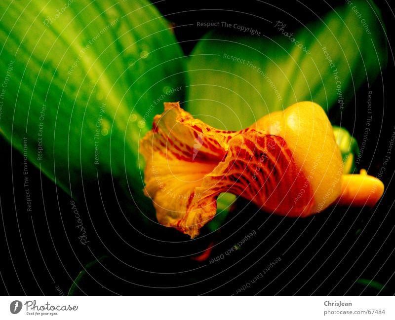 no.46 Natur schön grün Wasser Erholung ruhig Blüte träumen Wassertropfen nass Wellness Urwald Zoo Farbverlauf