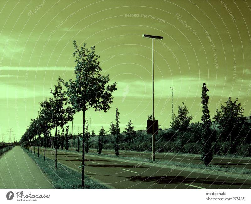 SURREAL CLEANISM Allee Asphalt Laterne geradeaus grün Baum Futurismus leer Menschenleer unnatürlich Natur Himmel Wolken mono Monochrom steril Endzeitstimmung