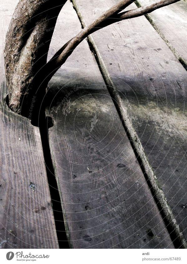 arrangement Pflanze Baum Holz Holzfußboden Balken Platz groß eng arrangiert Gegenteil Gesellschaft (Soziologie) Holzmehl Tanzfläche Bar Natur Ast Zweig