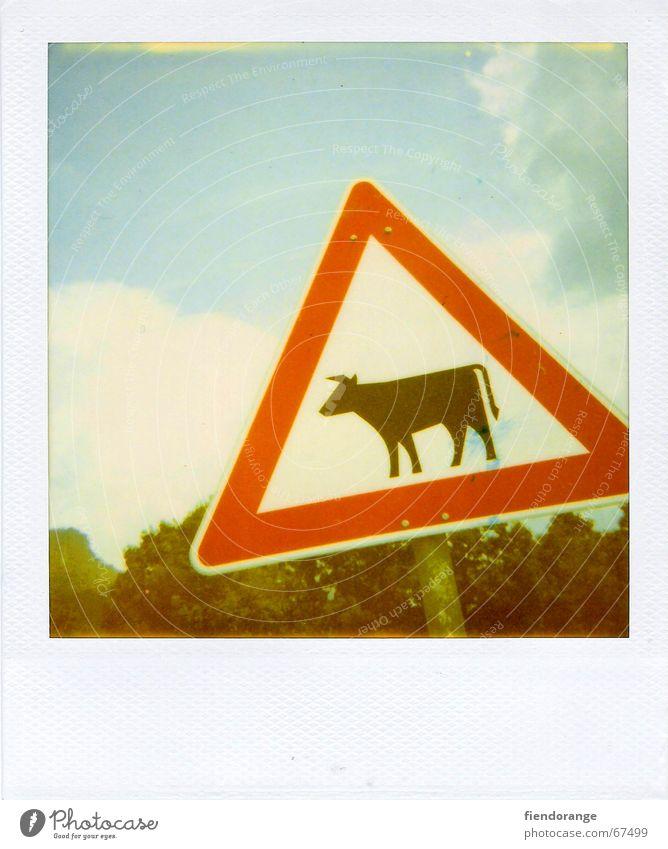achtung kuh Kuh Verkehrsschild Bulle Alpen Hinweisschild Berge u. Gebirge urlaub:polaroid Respekt