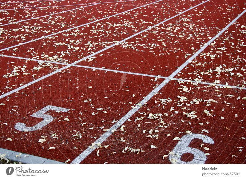 Run Run Run Rennbahn rot Blatt Linie Ausdauer Außenaufnahme Ziffern & Zahlen Schilder & Markierungen laufen Sport