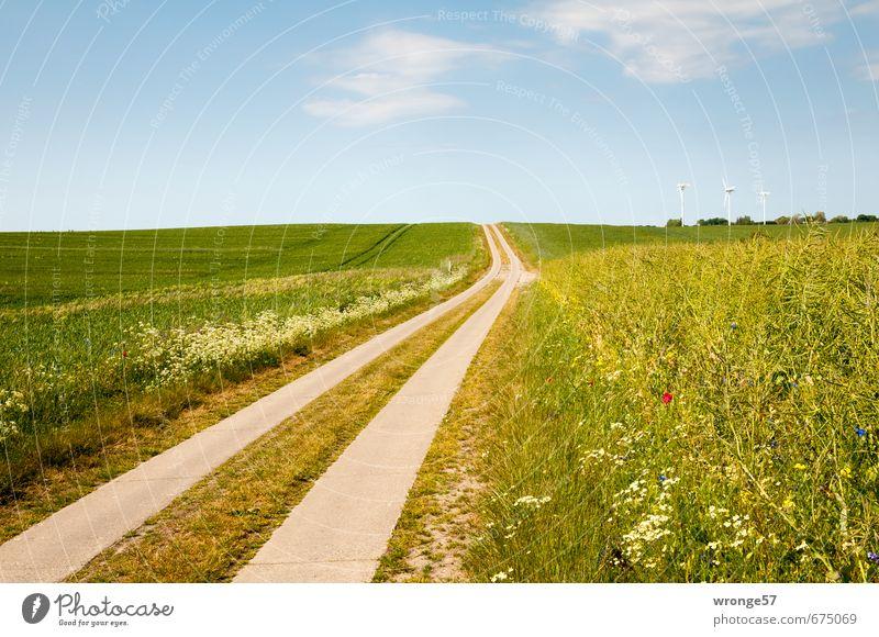 Sommerweg Umwelt Himmel Wolken Horizont Schönes Wetter Blume Gras Wildpflanze Feld Hügel Insel Rügen Feldrand Verkehrswege Wege & Pfade Betonspurweg blau
