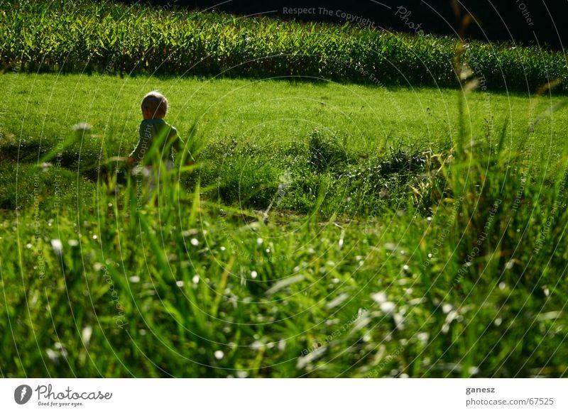 der sommer Sommer Gras grün Feld Kind sun field grass Freiheit freedom