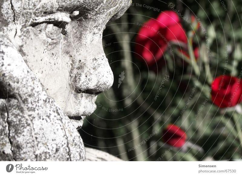 Medusas Opfer Junge rote Rose Blume Skulptur Kind Lippen Moos Kalkstein Eros ruhig Gefühle Romantik zeitlos gefangen schäbig Vergangenheit vergangen