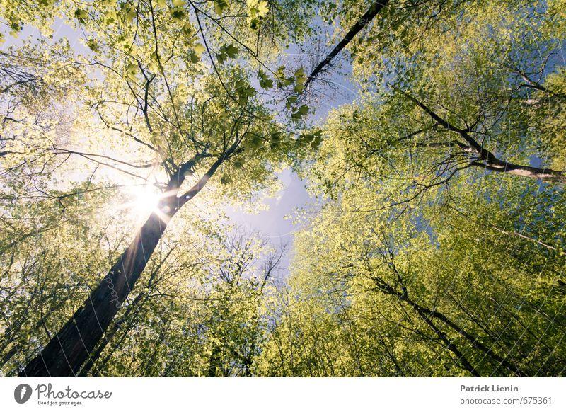 explosions in the sky Umwelt Natur Landschaft Urelemente Luft Himmel Frühling Sommer Klima Schönes Wetter Pflanze Baum Wald Abenteuer Duft Einsamkeit