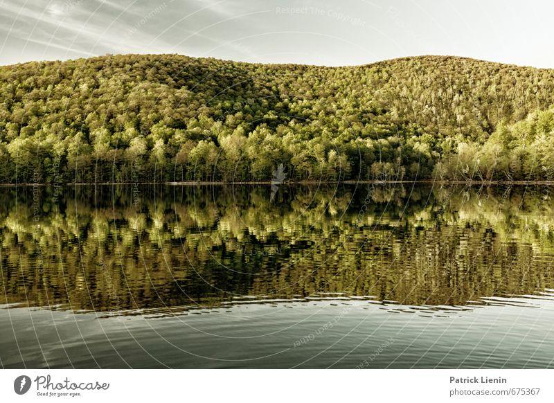 Waldgold Himmel Natur Ferien & Urlaub & Reisen Pflanze Sommer Wasser Sonne Baum Erholung Landschaft ruhig Wald Berge u. Gebirge Umwelt Leben Frühling
