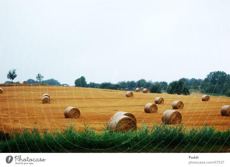 Heuballen Wiese Landschaft Feld Korn Stroh Strohballen