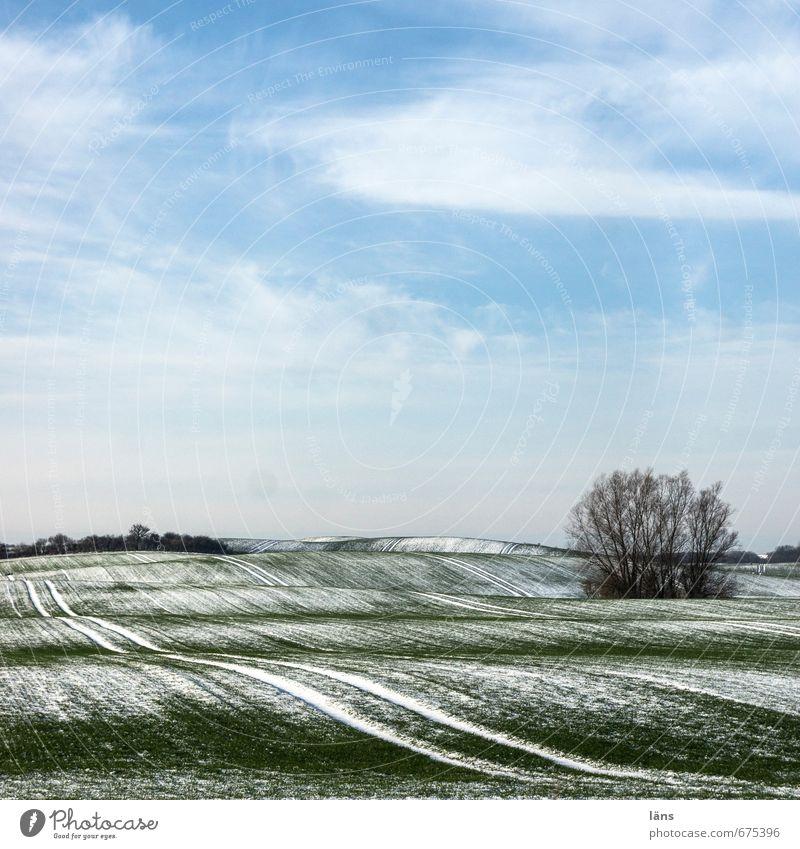 Winterkleid Umwelt Natur Landschaft Pflanze Erde Himmel Wolken Eis Frost Schnee Baum Feld Hügel Linie blau grün weiß Spuren Farbfoto Menschenleer