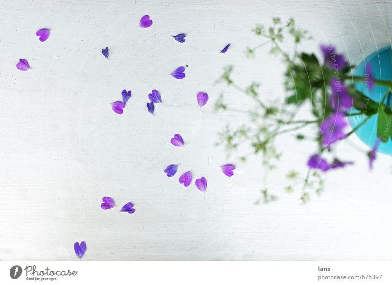 herzlichst dein... Blume Blühend Vase Blatt verblüht Fensterbrett gefallen