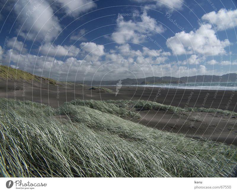 Endlich... Himmel Strand ruhig Wolken Ferne Gras Kraft Horizont kommen Neuseeland verweht