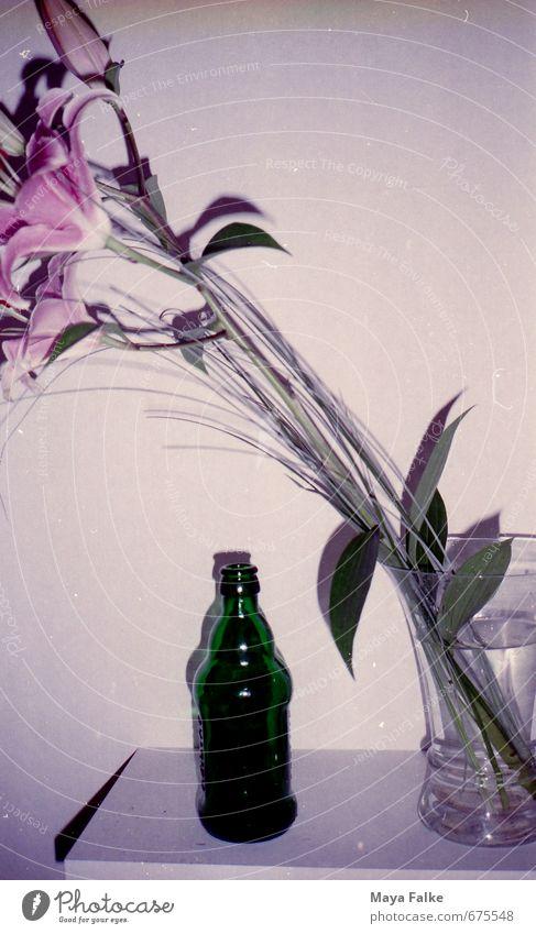 Beer & Flowers ruhig Innenarchitektur Feste & Feiern Freizeit & Hobby Dekoration & Verzierung Geburtstag stehen Küche Veranstaltung Bier Club Disco Nachtleben