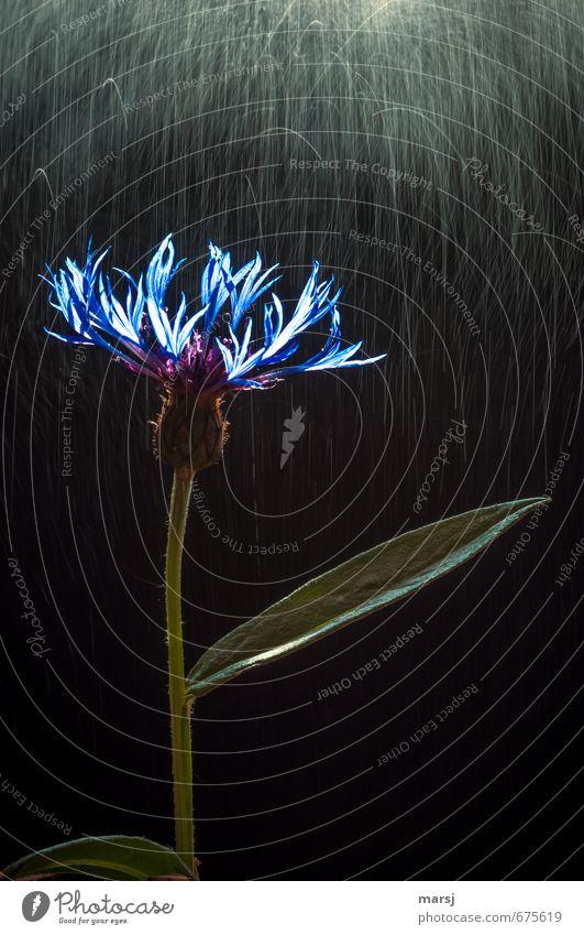 Frühlingsregen Natur blau Pflanze Sommer Erholung Blume Blatt Leben Blüte Stil außergewöhnlich träumen Regen glänzend leuchten