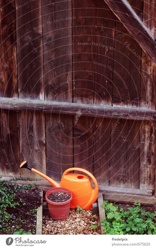 Das Gießkannenprinzip Wasser Pflanze Sommer Umwelt Frühling Garten Freizeit & Hobby orange Wachstum nass Blühend Landwirtschaft Kunststoff trocken anstrengen Beet