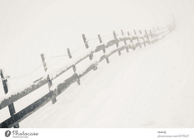 Nebel für Bernd Natur alt Einsamkeit Landschaft Winter dunkel kalt Traurigkeit Wiese Schnee Herbst grau Holz Stimmung Schneefall Eis