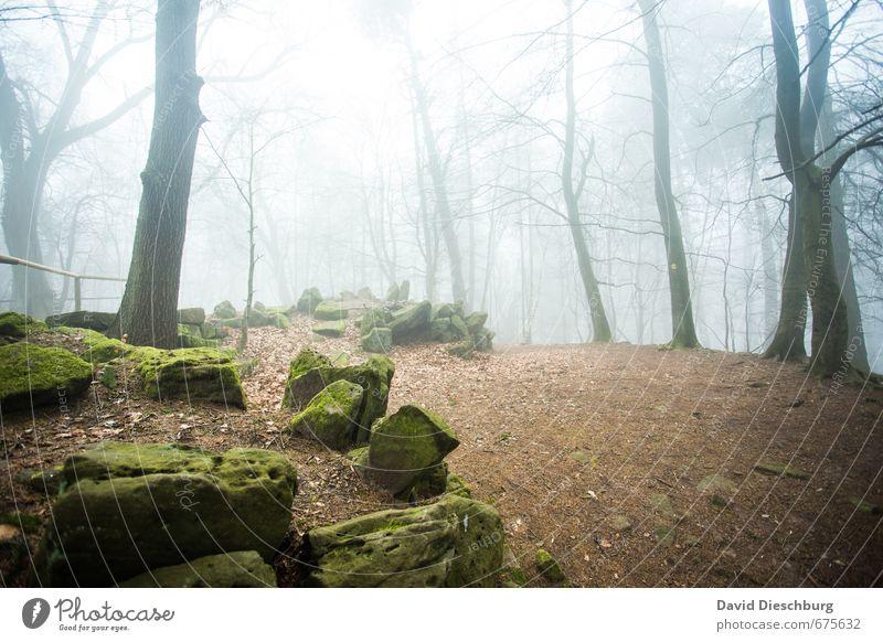 Filmkulisse für den Hobbit Landschaft Pflanze Tier Frühling Herbst Nebel Baum Moos Wald blau braun gelb grün schwarz weiß Märchenwald Stein geheimnisvoll