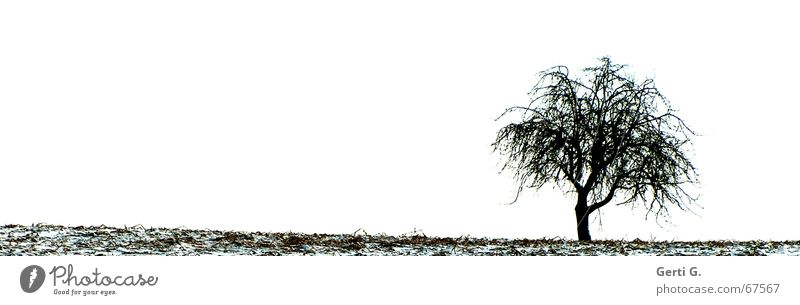 lonely Baum Natur Feld Winter einzeln Einsamkeit Blatt kalt Schnee Jahreszeiten tree field lonesome Ast blattlose äste karg