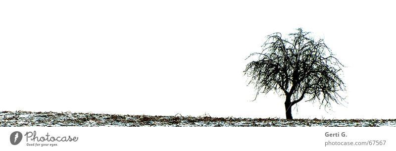 lonely Natur Baum Winter Blatt Einsamkeit kalt Schnee Feld Ast Jahreszeiten einzeln karg