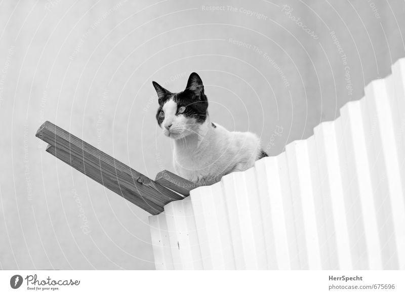 WatchCat Katze schön weiß Tier schwarz Wand Mauer grau Holz Metall sitzen warten ästhetisch bedrohlich Neugier stark