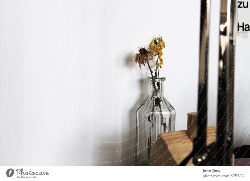 hinterlassen Innenarchitektur Dekoration & Verzierung Pflanze weiß Vergangenheit Vergänglichkeit Wachstum Wandel & Veränderung Häusliches Leben Vase Glas