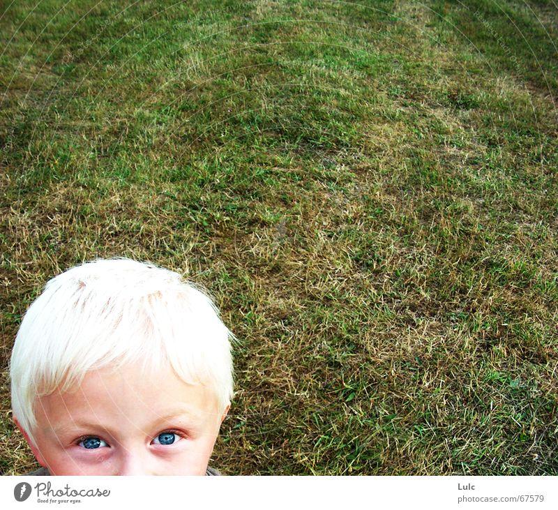 Peekaboo! blond Kind Mensch boy grass eyes head child
