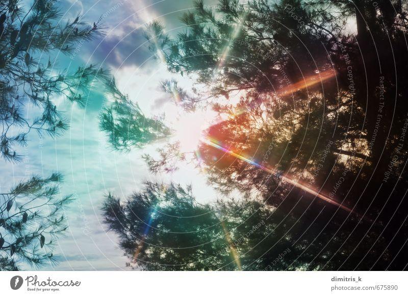 Himmel Natur schön Farbe Pflanze Sommer Sonne Baum Landschaft Wolken Blatt Wald Umwelt hell träumen Wetter