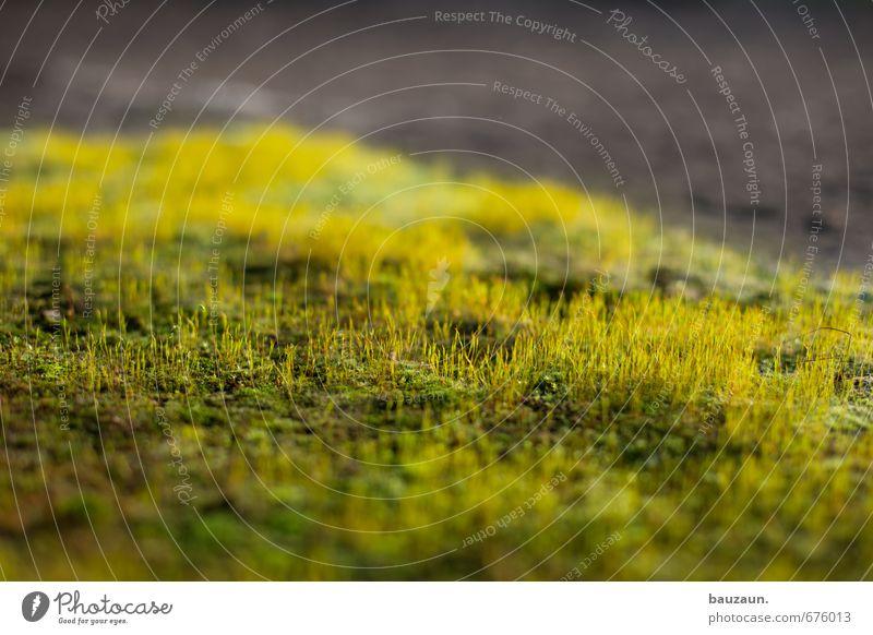 ut ruhrgebiet | ich glaub ich spinne. Umwelt Natur Pflanze Moos Garten Park Spinne 1 Tier Wachstum gelb grau grün Farbfoto Außenaufnahme Innenaufnahme abstrakt