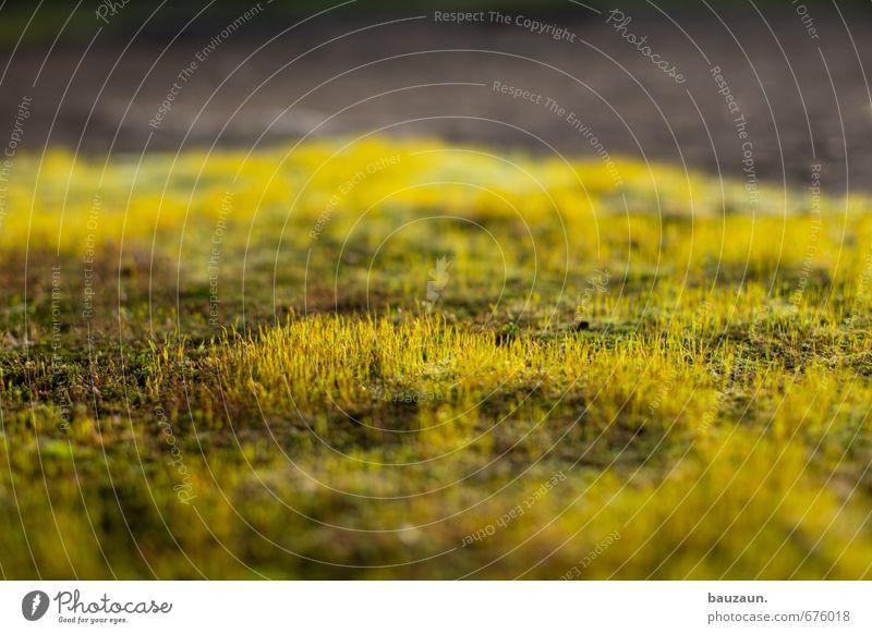 ut ruhrgebiet | ohne moos ist immer noch nix los. Umwelt Natur Erde Pflanze Moos Garten Park Wachstum gelb grau grün Farbfoto Außenaufnahme Innenaufnahme